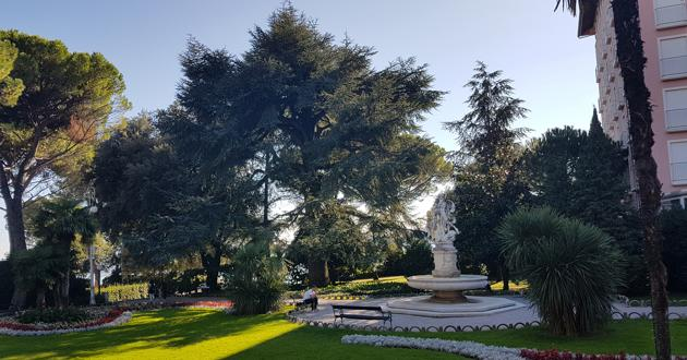 Cedar iz opatijskoga Parka sv. Jakova